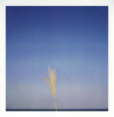 「空と海とススキの穂」