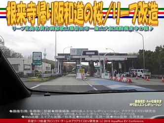 根来寺帰り阪和道の桜/リーフ改造04