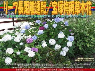 リーフ長距離運転/宝塚梅雨の花01
