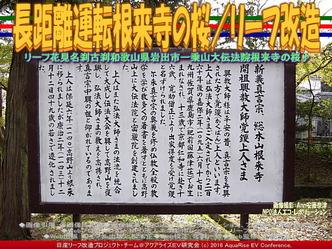 長距離運転根来寺の桜/リーフ改造02