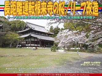 長距離運転根来寺の桜(2)/リーフ改造04