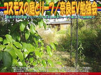 コスモスの庭とリーフ/奈良EV勉強会04