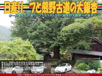 日産リーフと熊野古道の大銀杏@リーフカスタム02