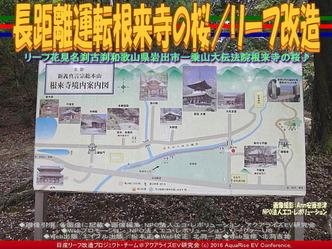 長距離運転根来寺の桜/リーフ改造01
