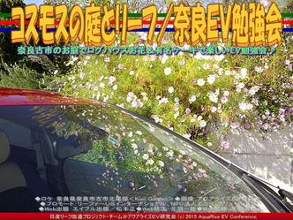 コスモスの庭とリーフ/奈良EV勉強会03