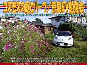 コスモスの庭とリーフ(2)/奈良EV勉強会04