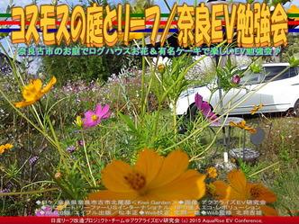 コスモスの庭とリーフ(2)/奈良EV勉強会01