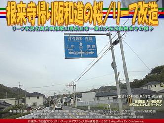 根来寺帰り阪和道の桜/リーフ改造05