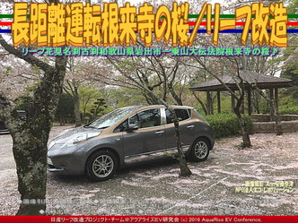 長距離運転根来寺の桜/リーフ改造03
