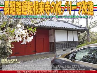 長距離運転根来寺の桜(3)/リーフ改造04
