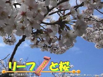リーフと桜@日産リーフ改造4