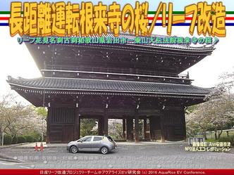 長距離運転根来寺の桜(3)/リーフ改造03