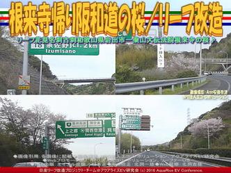 根来寺帰り阪和道の桜/リーフ改造02