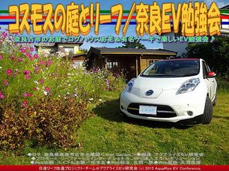 コスモスの庭とリーフ(2)/奈良EV勉強会03