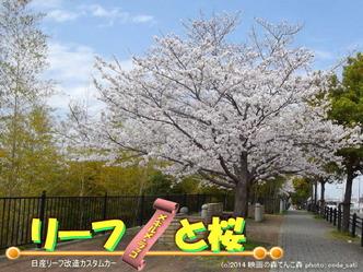 リーフと桜@日産リーフ改造10