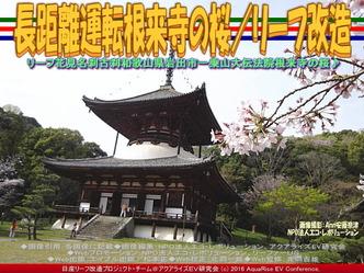 長距離運転根来寺の桜(2)/リーフ改造02