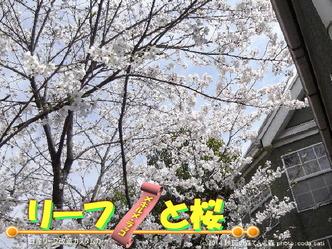 リーフと桜@日産リーフ改造5