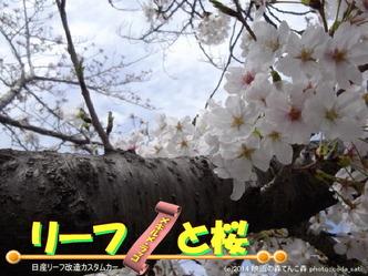 リーフと桜@日産リーフ改造6