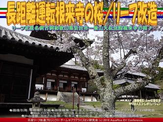 長距離運転根来寺の桜/リーフ改造04