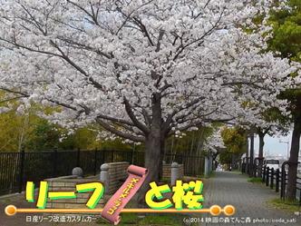 リーフと桜@日産リーフ改造11