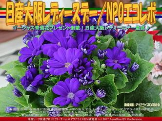 日産大阪レディースデー/NPOエコレボ画像01