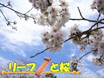 リーフと桜@日産リーフ改造2