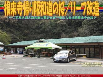 根来寺帰り阪和道の桜/リーフ改造01