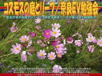 コスモスの庭とリーフ(2)/奈良EV勉強会05