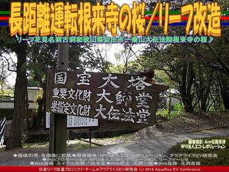 長距離運転根来寺の桜(2)/リーフ改造01