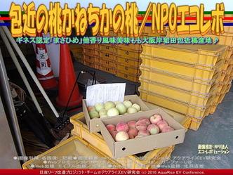 包近の桃/NPO法人エコ・レボリューション01
