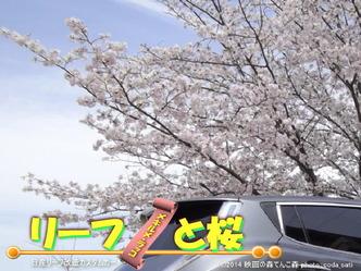 リーフと桜@日産リーフ改造1