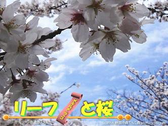 リーフと桜@日産リーフ改造3