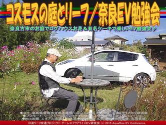 コスモスの庭とリーフ(2)/奈良EV勉強会02