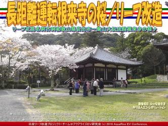 長距離運転根来寺の桜(2)/リーフ改造03