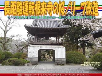 長距離運転根来寺の桜(3)/リーフ改造02