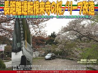 長距離運転根来寺の桜(3)/リーフ改造01