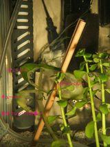 2005.11.17-01ホウレンソウ&キューリ