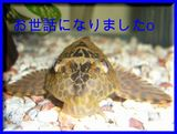 2005.12.31 セルフィンあいさつο