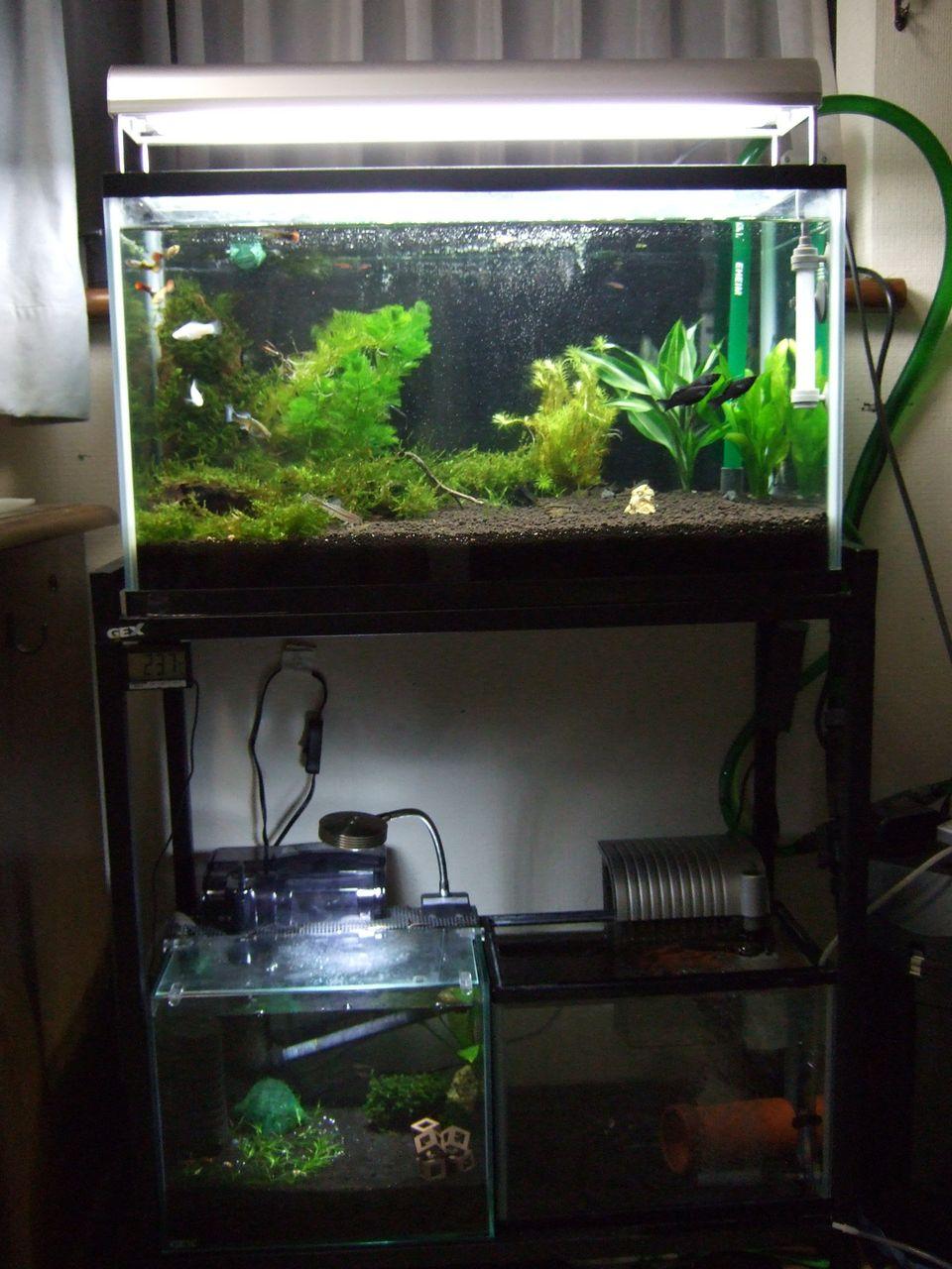 Aquarium Blog はじめまして