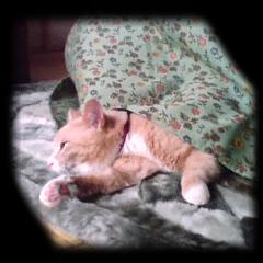 猫はコタツで・・・