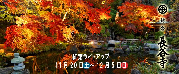 かまくら KAMAKURA 鎌倉 : TAKA2     鎌倉歩いて 935.9km                   <鎌倉の季節の花を中心に鎌倉の旬を紹介ています>                TAKA2