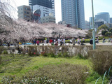 お花見で盛り上がる公園
