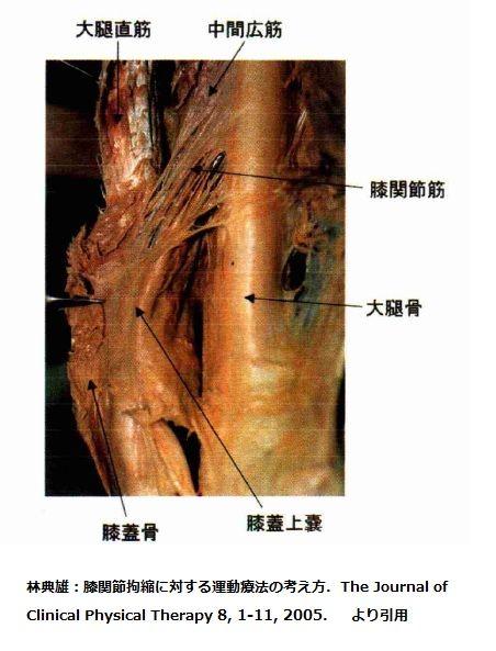膝関節筋②