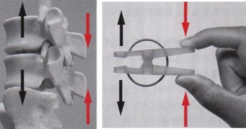 洗濯ばさみによる脊柱起立筋の作用イメージ