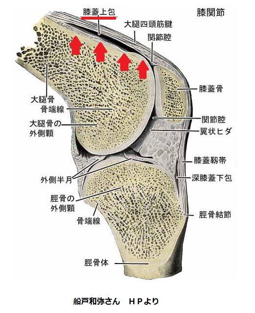 「膝蓋上納」の画像検索結果