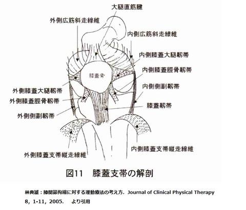 膝蓋大腿靭帯解剖