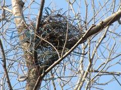 カラスの巣A