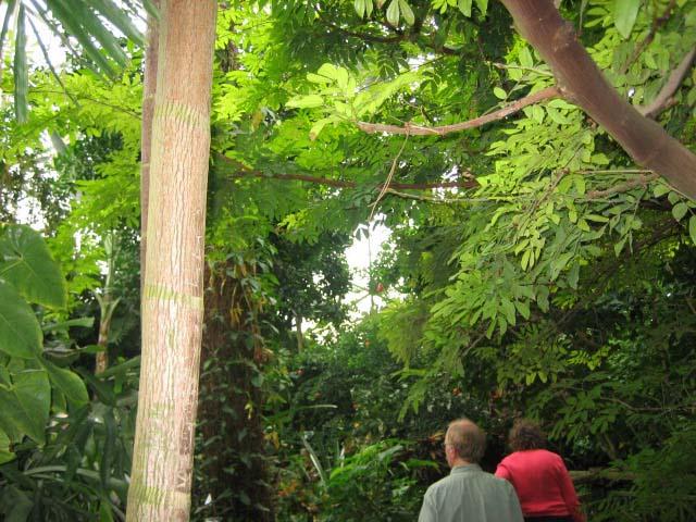 ミルウォーキーの植物園