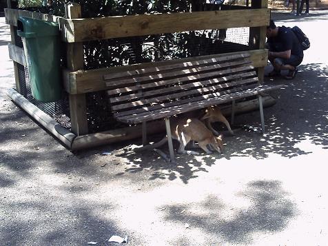フェザール動物園