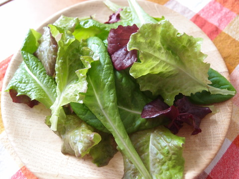 リーフサラダレタス2 家庭菜園 育て方